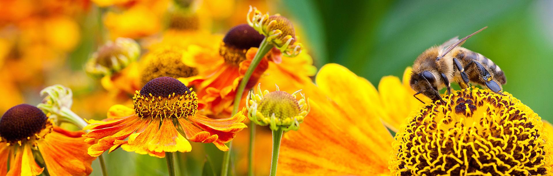 Collage-Bienen